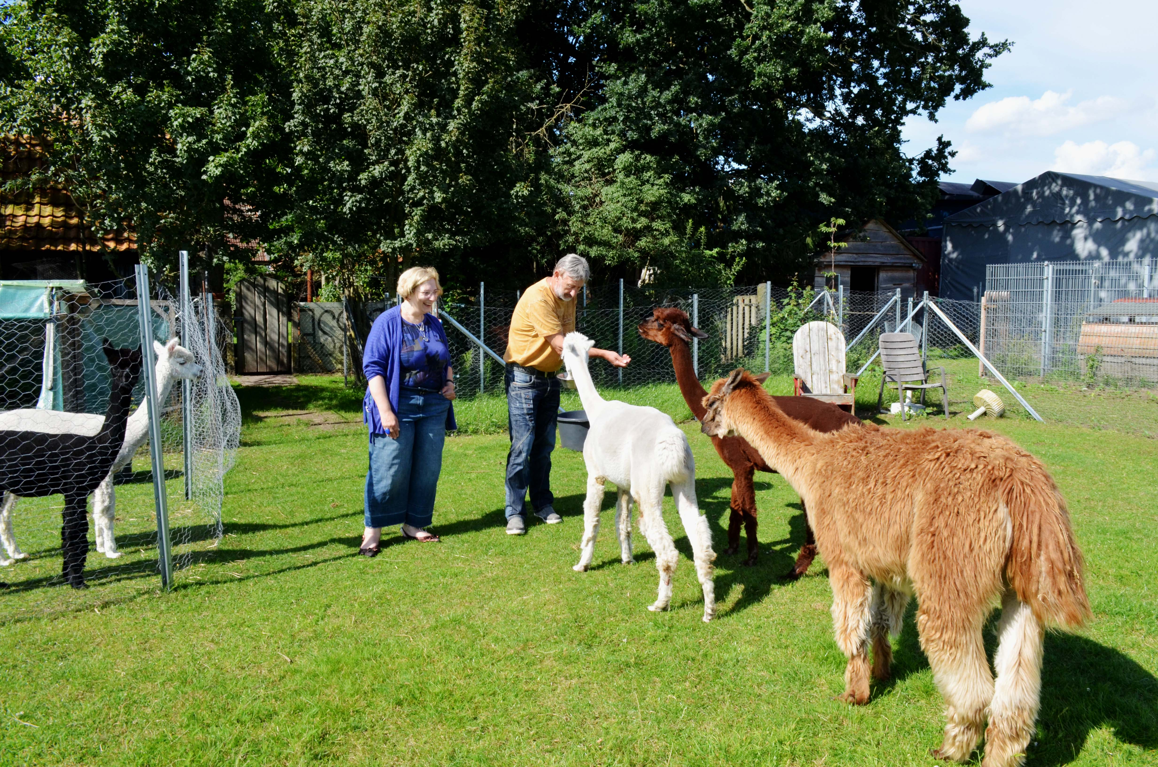 Dr. Daniela De Ridder und Helmut Büers bei der Fütterung der Alpakas